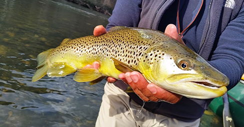 Guiding year round all over Northern California's rivers, creeks and streams. We have the knowledge to introduce the fundamentals or to stay on the sticks and let you fish. We'll take the trip you won't forget.